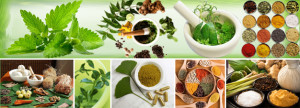 Sissha Medicine uses leaves, flowers, fruit and various roots in a mixed basis